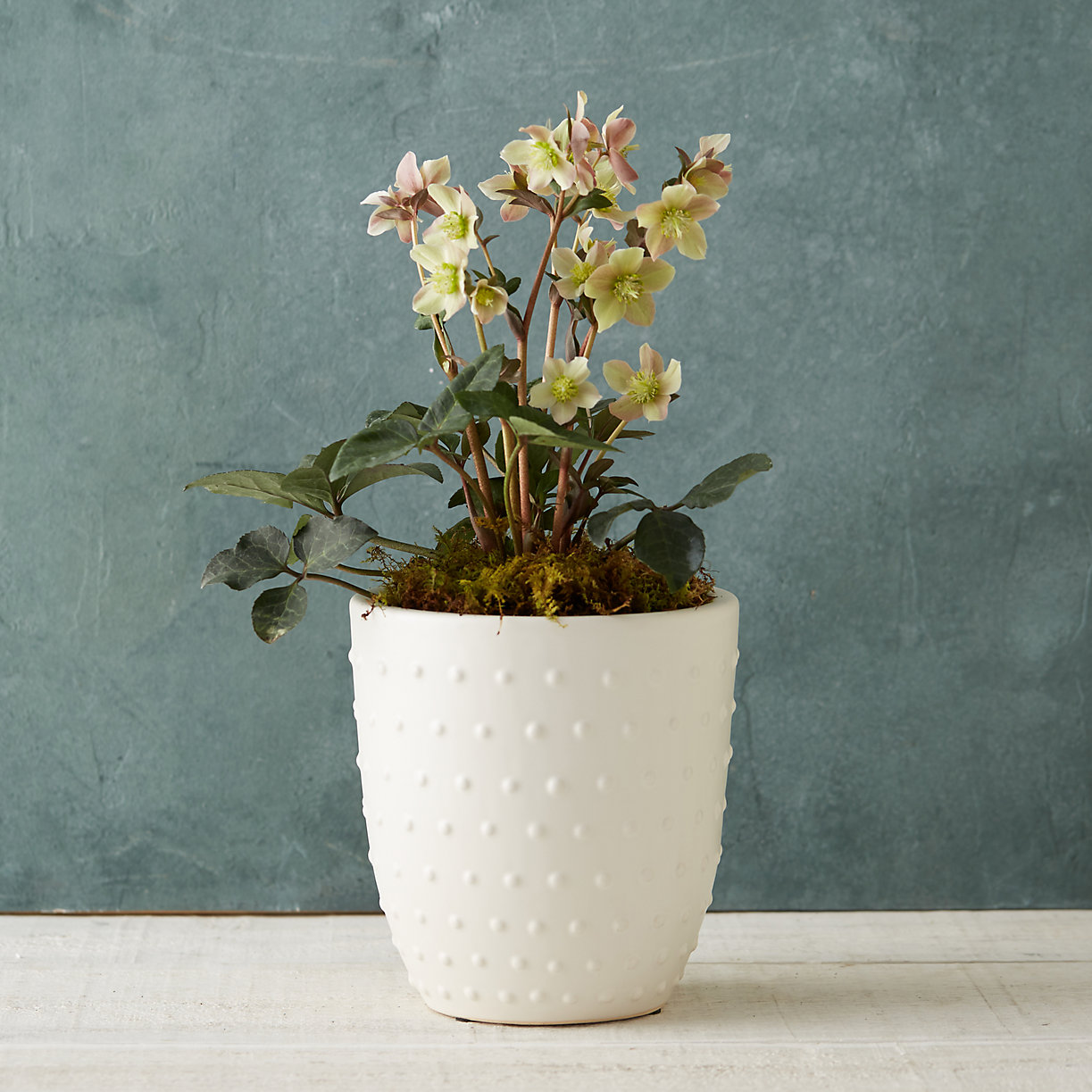 Mother's day gift guide planter