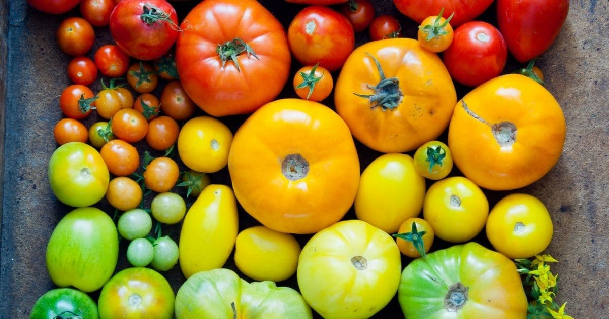 A picture of tomatoes