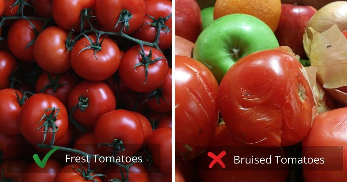 A banner showing the type of tomatoes that should be picked to freeze