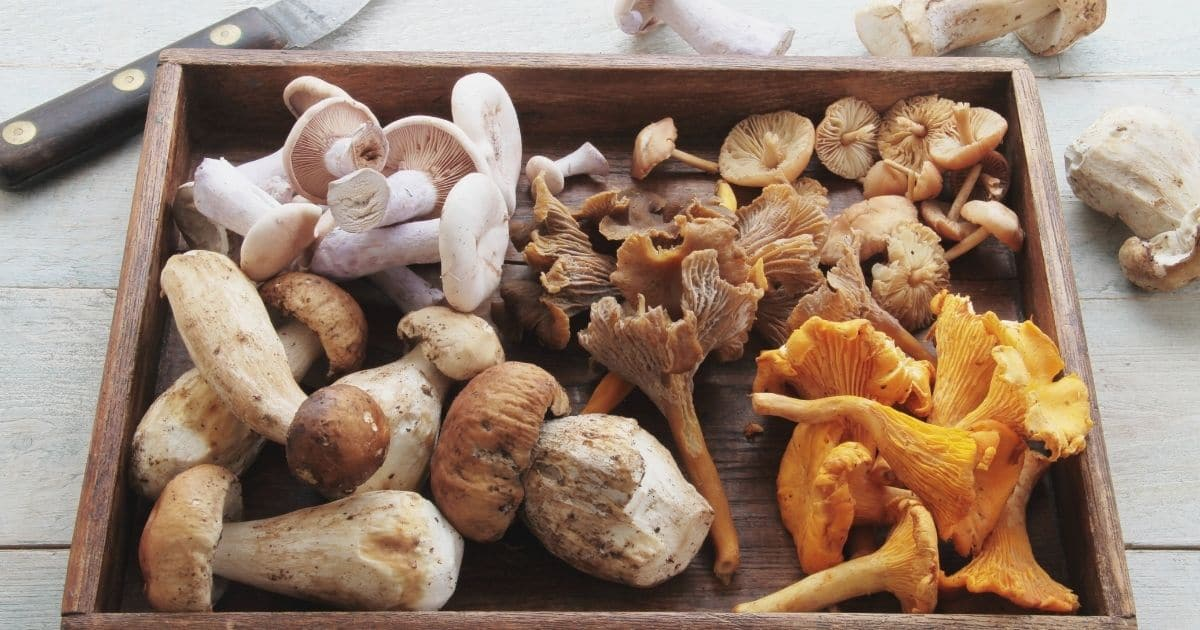 A picture of different type of mushrooms