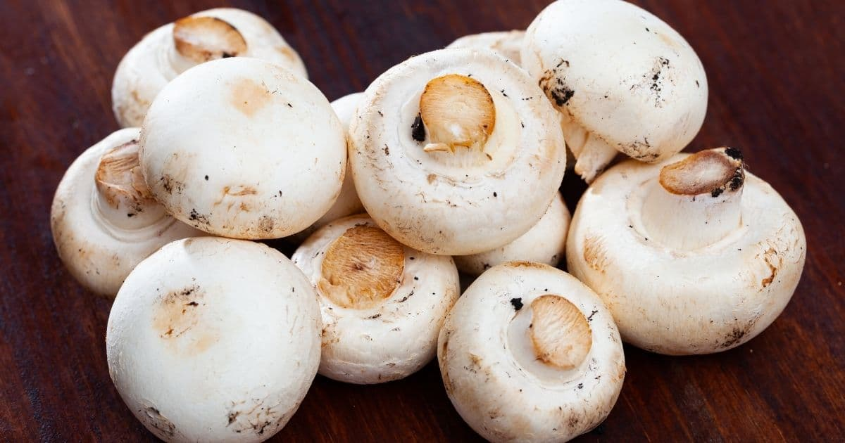 A picture of raw mushrooms