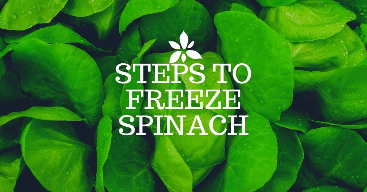 Steps to be taken to freeze the spinach