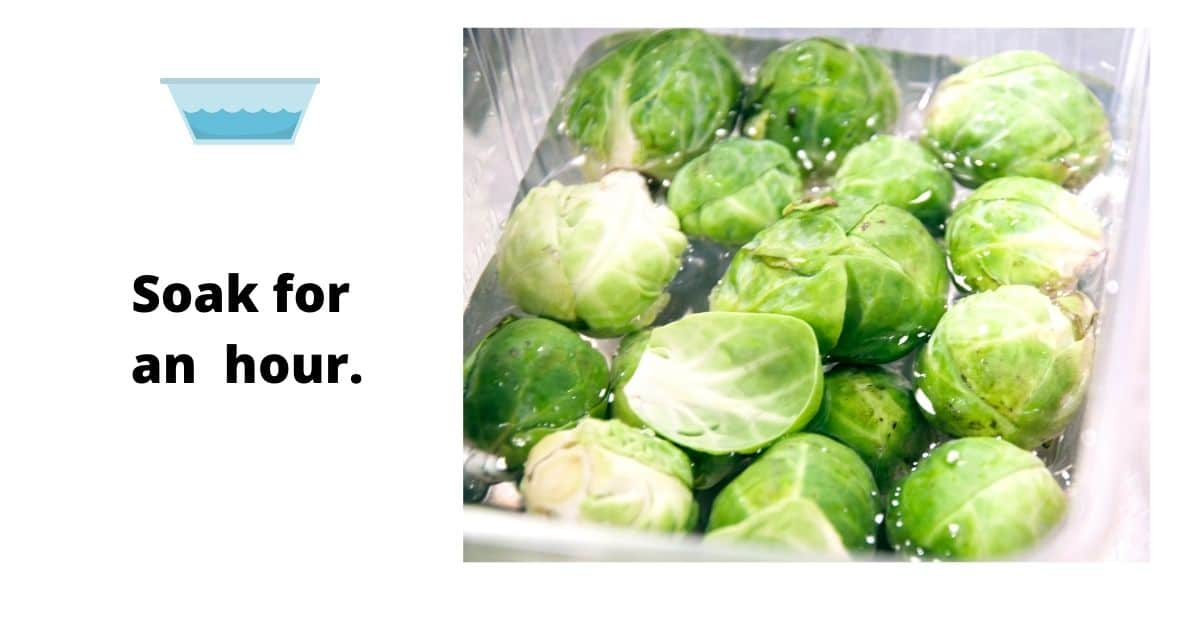 Brussel sprouts soaked in water